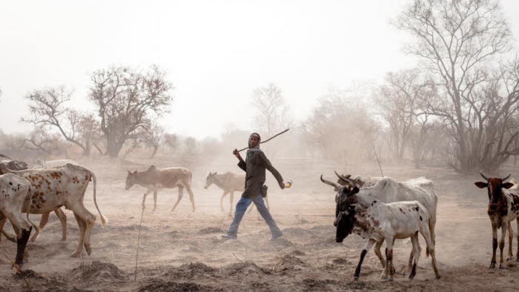 Bénin – Mali – Sahel : Sécurité : La prévention des conflits liés à la transhumance transfrontalière au Sahel au cœur d'une rencontre àCotonou