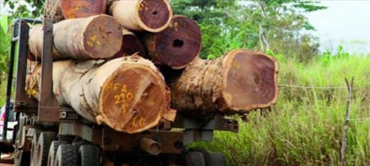 Sénégal: Coupe de bois en Casamance : Le GRPC pour la suspension de la délivrance des permis #sécurité#Bofa