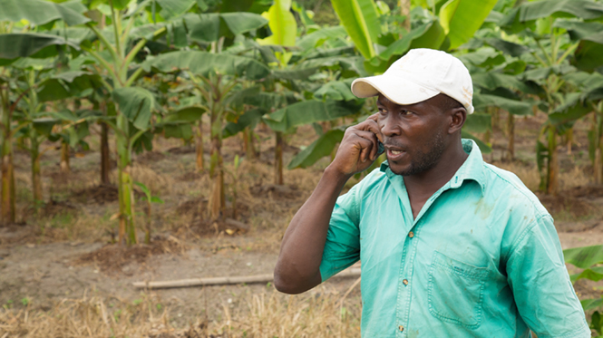 How can digital technology help transform Africa's foodsystem?