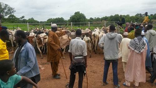 Burkina – Conflits agriculteurs-éleveurs : Sur les pistes de transhumance de l'axeFadji-Kompienga