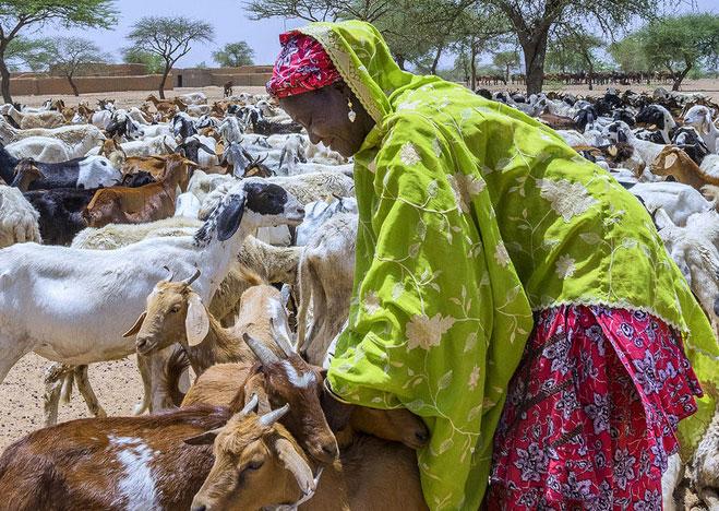 Le Niger classé dernier du Développement humain(PNUD)